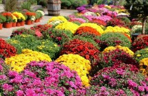 Executive Order Extends Stay Home Order, Allows Garden Centers to Open