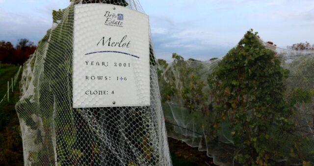 Brys Estate Vineyard & Winery | Jane Boursaw Photo