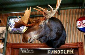 Smooch the Moose at Sleder's | Jane Boursaw Photo
