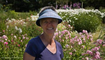ginny coulter, old mission flowers, old mission, old mission michigan, old mission peninsula, old mission gazette