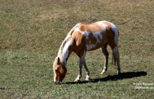 Horses of Old Mission