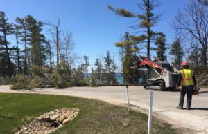 Tree Cutting Peninsula Drive