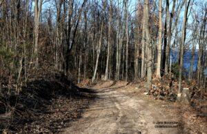 woodland, woods