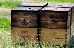 bees, sleeping bear farms