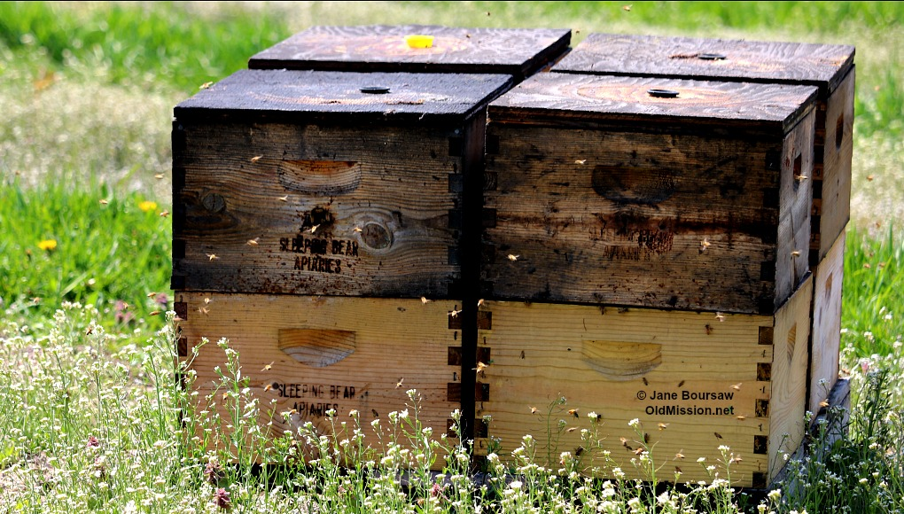 Photo of the Day: May 6, 2016 - Bees from Sleeping Bear Farms