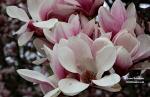 Ed Brown, Tulip Tree