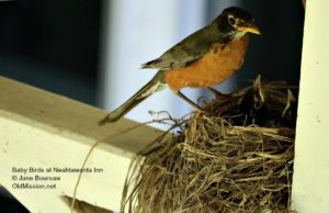 birds, birds of old mission, neahtawanta inn, yoga