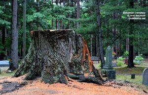 Bohemian Cemetery, Neahtawanta, trees