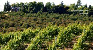 Chateau Chantal, vineyards, orchards
