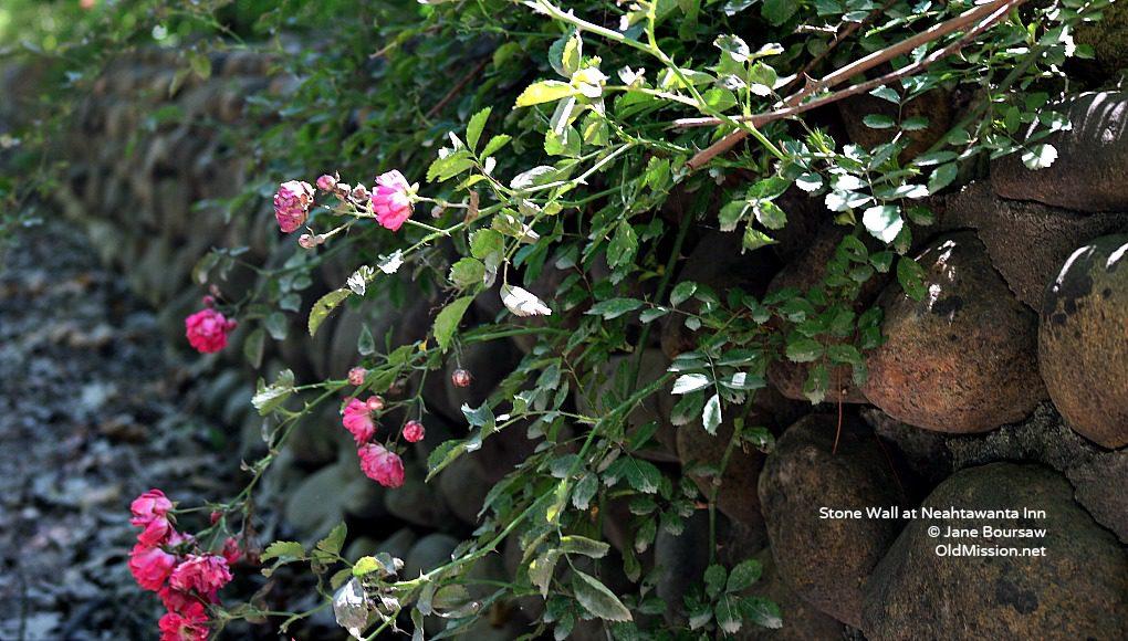 stone wall, neahtawanta inn, roses, flowers