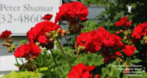 omp, old mission, congregational church, church, anniversary, geraniums