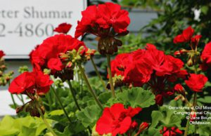 omp, old mission, congregational church, church, anniversary, geraniums