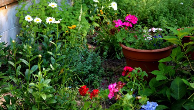 Gov. Whitmer closes garden centers in Executive Order 2020-42