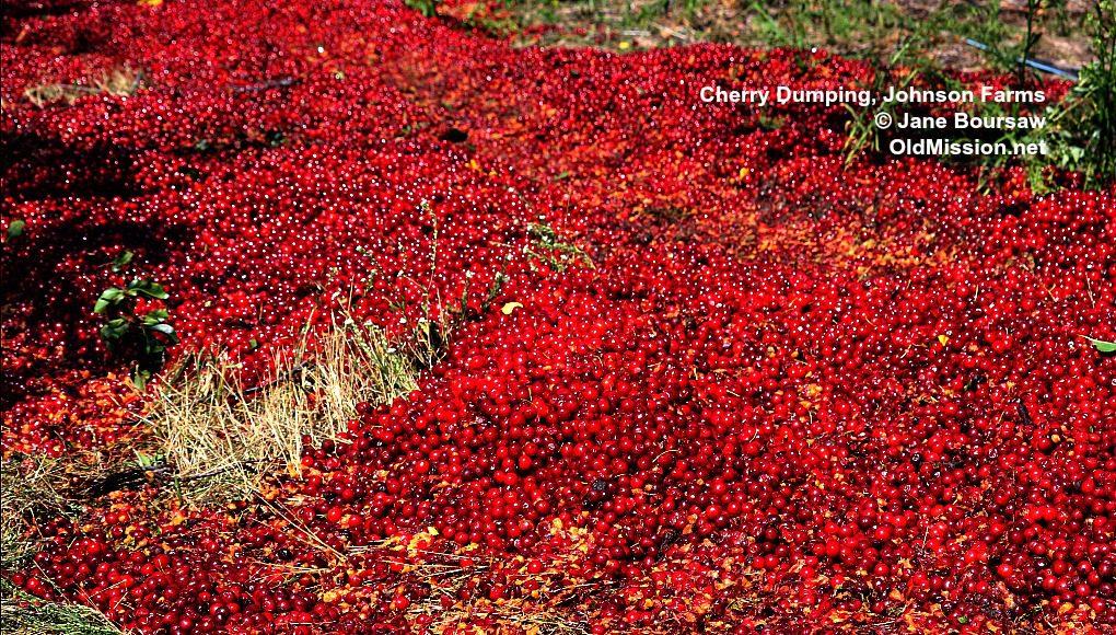 cherries, cherry, cherry diversion, johnson farms