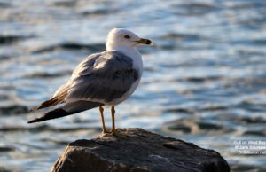 seagull, west bay, bowers harbor, bowers harbor yacht club