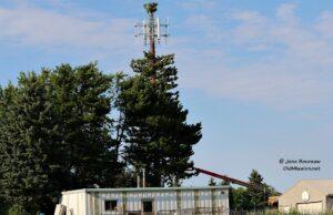 cell tower, tree, center road, acentek, tony andrus