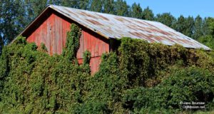 Ted Ayers, Dennis Bee, Old Mission Peninsula, Barns