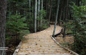 Pyatt Lake The Bill Carls Nature Preserve, grand traverse regional land conservancy, old mission peninsula trails