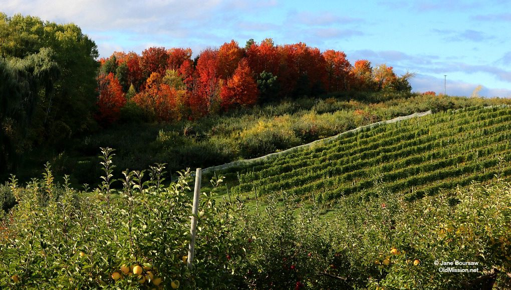 fall colors, reamer, degraw, maurice degraw, old mission peninsula
