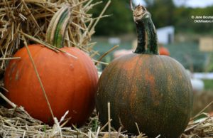pumpkins, secret garden, brys estate