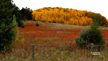 the 81, development, public hearing, farmland
