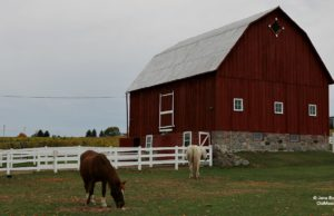 island view road, horses, barns