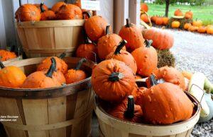 halloween, pumpkins, ben bramer, roadside stands