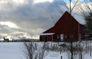horses, barns, debbie bee, winter solstice
