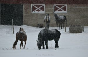 horses, lenny ligon, eddie ligon, photo calendar