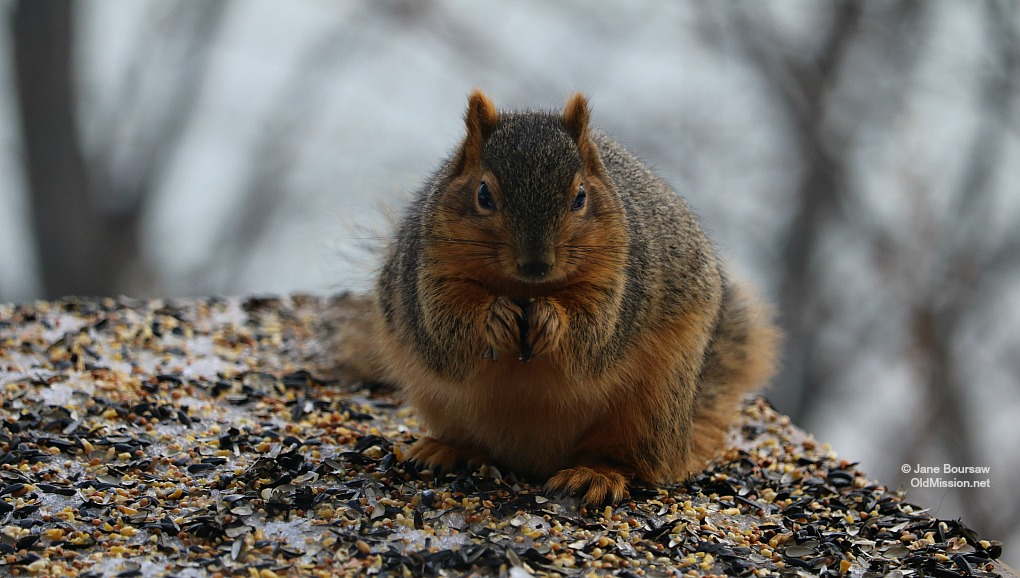 squirrel, mutant squirrel