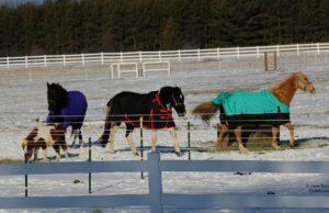 tompkins road, horses, horses of old mission