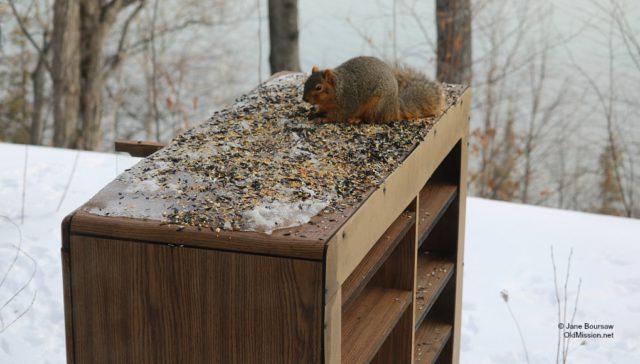 entertainment center, squirrel