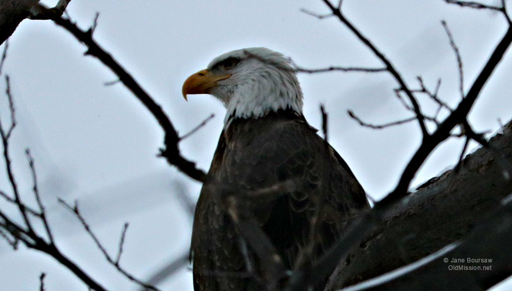 eagle, neahtawanta