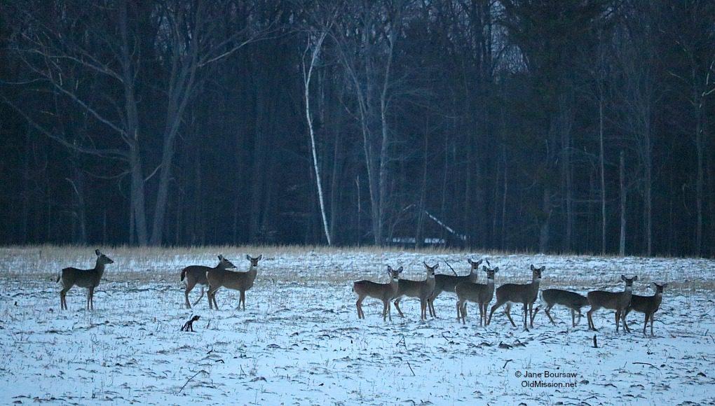 deer, bull brothers, swaney road, peninsula drive