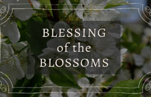 blessing of the blossoms, chateau chantal, blossoms, cherry blossoms, old mission peninsula, old mission, old mission michigan, old mission gazette, peninsula township