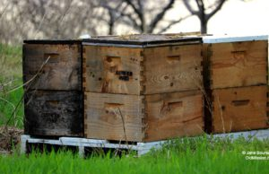 sleeping bear farms, bees, beekeeper, honey bees