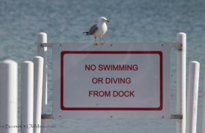 Haserot Beach, Gull, park commission, seagull