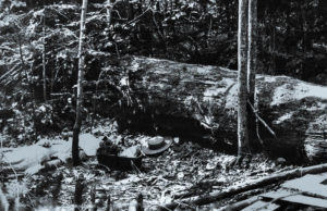 woodruff parmelee, julia curtis, old mission peninsula, murder undone, stephen lewis, murder on old mission, old mission michigan, traverse area district library, TADL, SE Wait