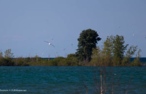 gull island, old mission peninsula, old mission michigan, center road, M37, mission point lighthouse, seagulls