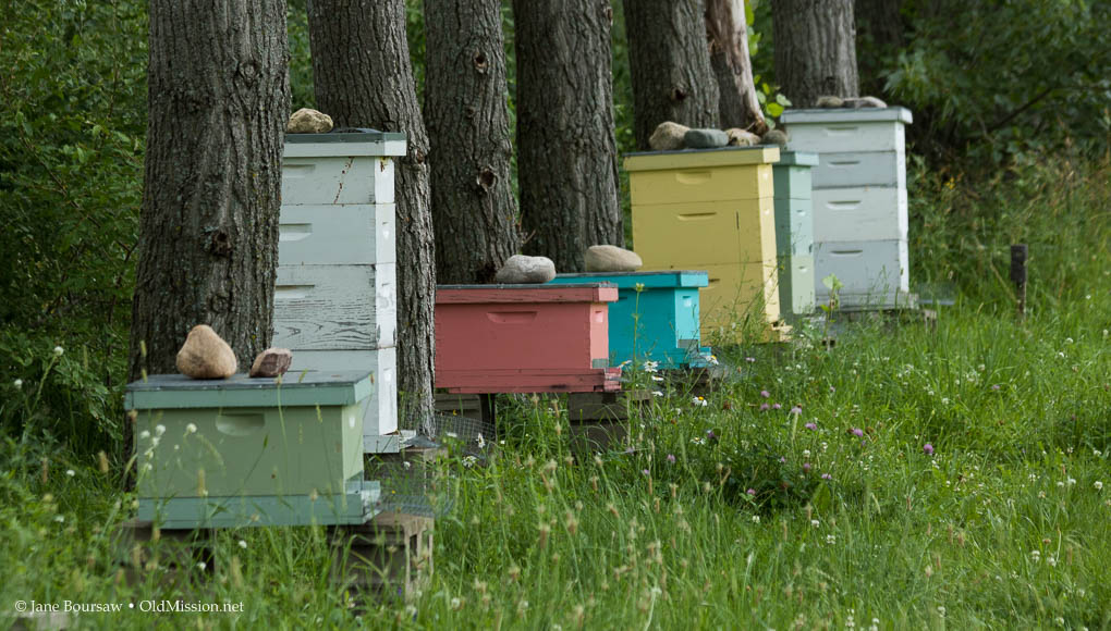 Ona Mission Honey Farm, Joel Schaeffer, Beekeeper, Old Mission Peninsula,  Old Mission