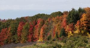 fall colors, hogsback, dean johnson, johnson farms, old mission gazette, old mission peninsula, michigan, old mission, old mission michigan, peninsula township