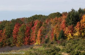 fall colors, hogsback, dean johnson, johnson farms, old mission gazette, old mission peninsula, michigan, old mission, old mission michigan, peninsula township