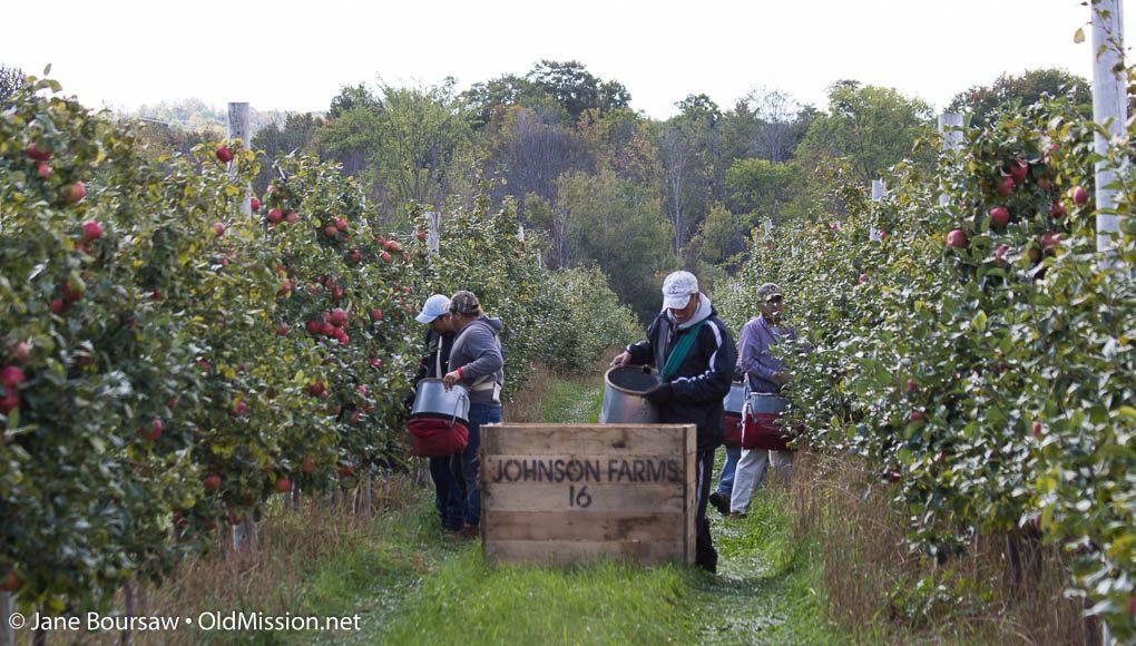 walter johnson, mary johnson, johnson farms, the 40, apples, old mission peninsula, stella johnson, lester johnson, old mission, old mission michigan, old mission gazette, peninsula township, apple pickers