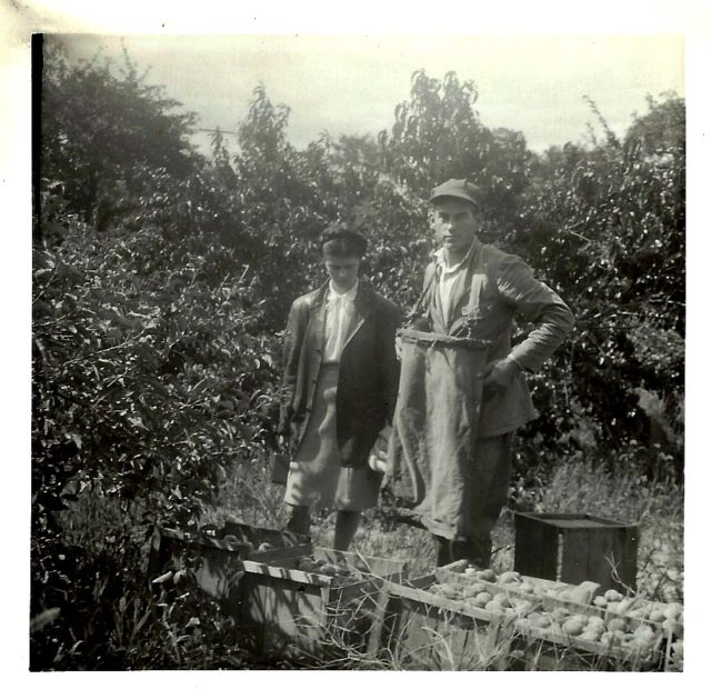 walter johnson, mary johnson, johnson farms, the 40, apples, old mission peninsula, stella johnson, lester johnson, old mission, old mission michigan, old mission gazette, peninsula township
