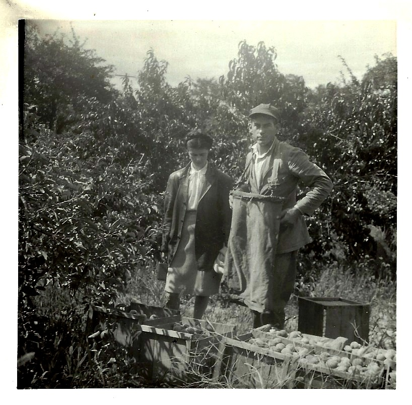 crescent hill fruit farms, walter johnson, mary johnson, johnson farms, the 40, apples, old mission peninsula, stella johnson, lester johnson, old mission, old mission michigan, old mission gazette, peninsula township