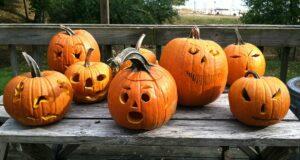 halloween, pumpkins, pcl, peninsula community library, old mission peninsula, omp, peninsula township, old mission, old mission michigan, old mission gazette