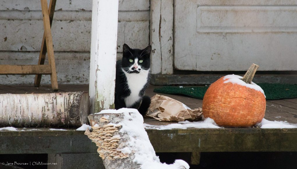 old mission, cats of old mission peninsula, cats, old mission michigan, old mission peninsula, peninsula township, old mission gazette,