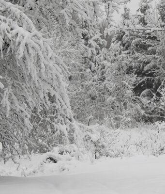 blizzard, april snow, old mission peninsula, old mission, old mission michigan, old mission news, weather, xanto, snowmageddon, old mission gazette