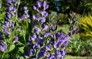 old mission flowers, al penney, celebration of life, old mission peninsula, old mission, old mission michigan, peninsula township, old mission gazette