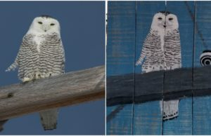 ron brown, pallet painting, snowy owl, jane boursaw, old mission, old mission michigan, old mission peninsula, red dresser, red dresser barn market, kingsley, old mission gazette